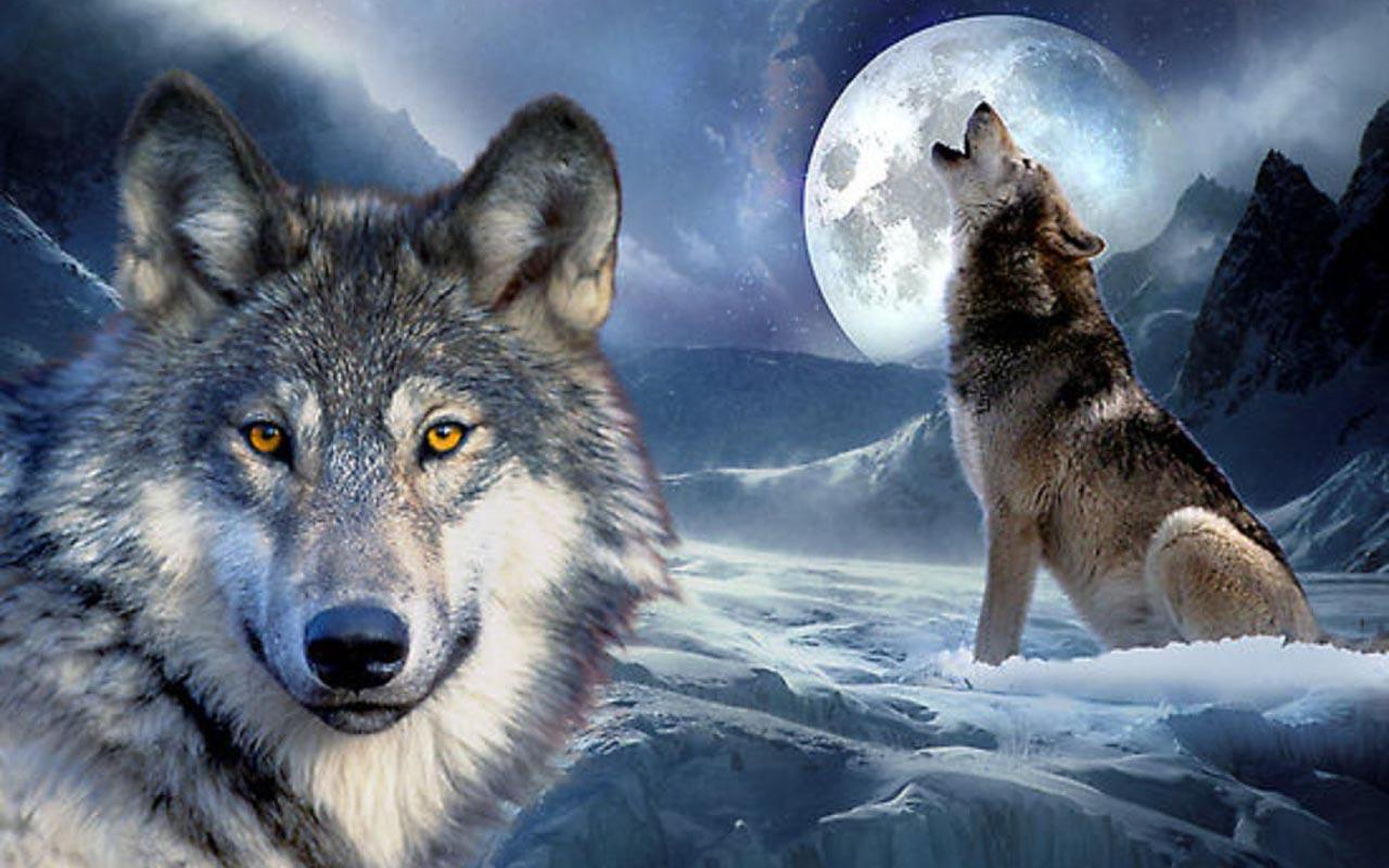 3d wolf wallpapers android apps on google play