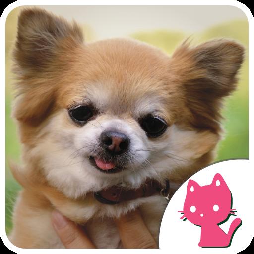 かわいいチワワ画像 個人化 App LOGO-硬是要APP