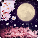 Cherry Blossoms & Full Moon