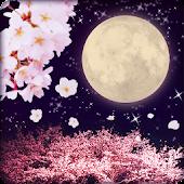 Cherry Blossoms & Full Moon