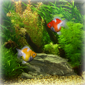 Goldfish Aquarium LWP icon