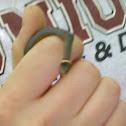 Ring Neck Snake
