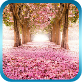 Sakura Trail Live Wallpaper