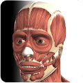 Visual Muscles 3D APK Descargar