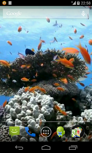 Sea fish Video Live Wallpaper
