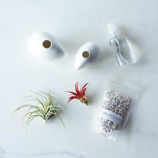 Airplant Vase Set