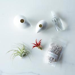 Airplant & Pebble Vase Set