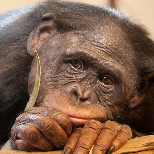 Sad animals in Zoo LOGO-APP點子