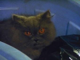 第17話「黒猫に罠を張れ」