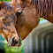 201204009-1600-horse-mom-colt-noWM.jpg