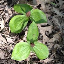 Flora of Kentucky