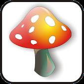 Mushroom doo-dad red/yell