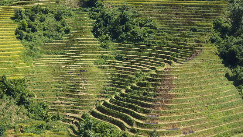 Rice terraces on a mountainside near the city of Sa Pa, or Sapa, in Vietnam.