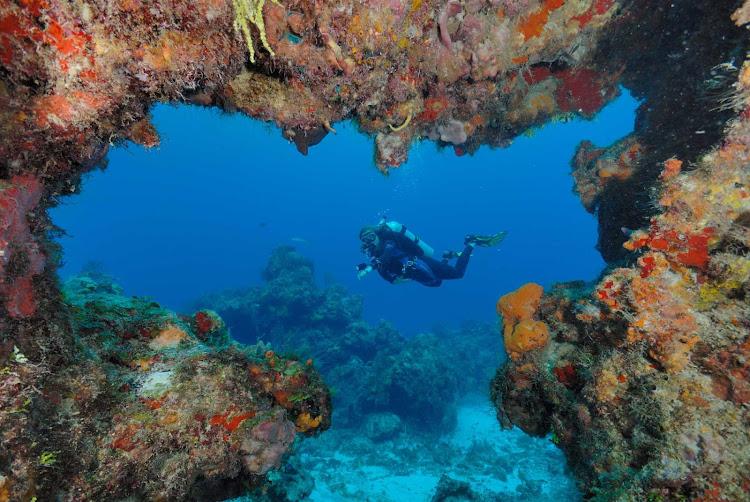 Scuba divers swim through coral reefs near Cozumel.
