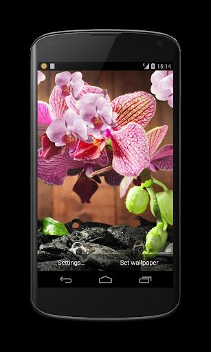 분홍색 난초 라이브 배경 화면