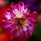 IMG_1058-12.jpg