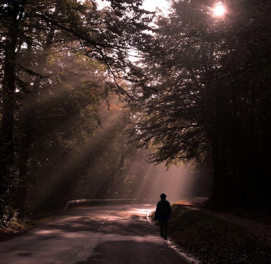 Against the sun's rays! by Jože Borišek - Landscapes Forests ( bohinj (slovenia) )