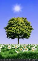 Screenshot of Summer Trees Live Wallpaper