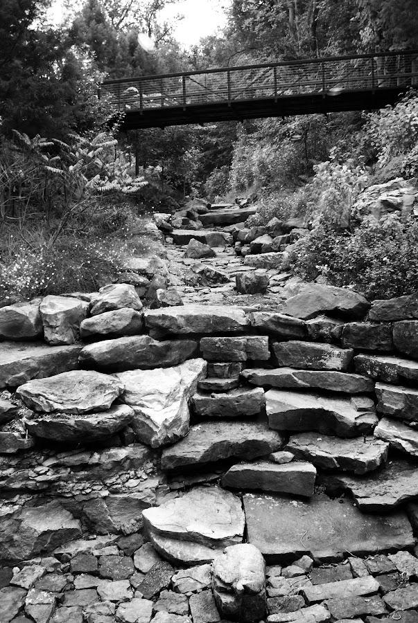 Dry Creek by Rhonda Musgrove - Black & White Landscapes ( black and white, waterfall, creek, bridge, rocks )