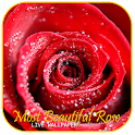 Most Beautiful Rose LWP