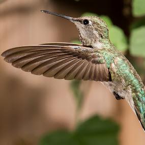 Fine Lines by Jim Malone - Animals Birds