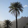 Flora of Morocco