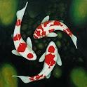 Koi Fish Wallpapers icon