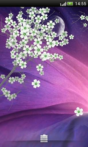 高清樱花动态壁纸
