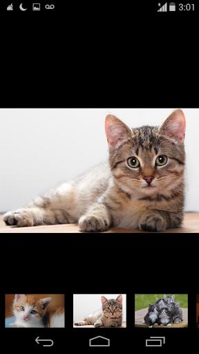 wallpaper funny cat