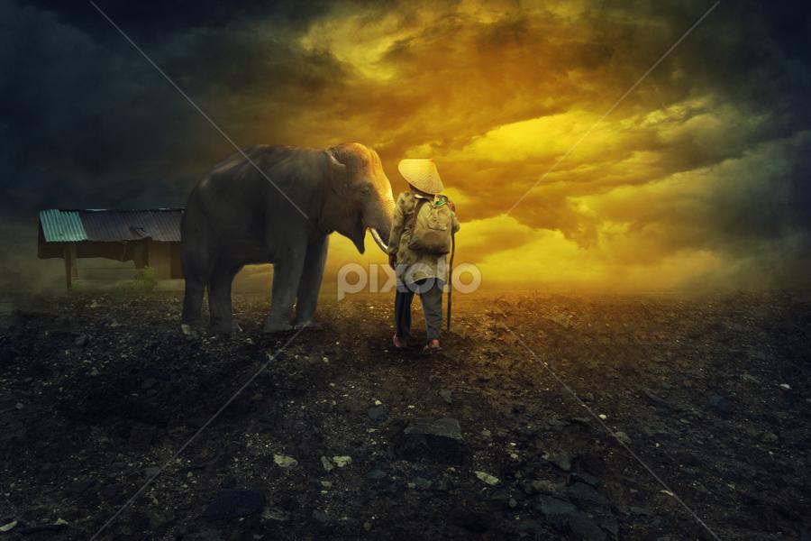 MAN & ELEPHANT by Ilham Abdi - Digital Art Places ( photoshop art, elephant, tutorial, manipulation, man )