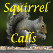 Squirrel Calls