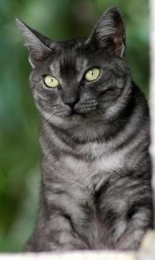 芒奇金猫壁纸