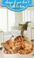 Screenshot of Real Talking Cat