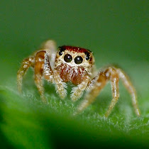Spiders of Tennessee
