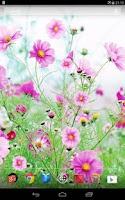 Screenshot of Sweet Flowers Live Wallpaper