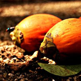 Betel Nut by Suryani Sabri - Food & Drink Fruits & Vegetables ( orange, fly, betel nut,  )
