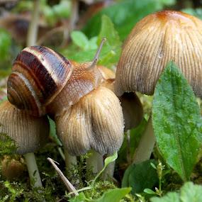 by OL JA - Nature Up Close Mushrooms & Fungi (  )
