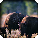 Aurochs Wallpapers icon