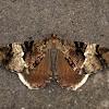 Geometridae, Ennominae