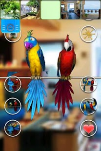 Talking Parrot Couple Free- screenshot thumbnail