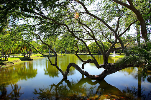 Crandon Park in Miami features mangroves and other local plants.