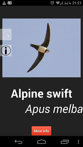 Birds in Britain Pro