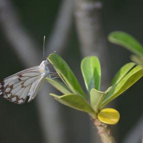 Butterfly by Palak Patel - Uncategorized All Uncategorized