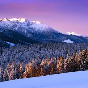 Deep forst by Boris Michaliček - Landscapes Mountains & Hills ( mountains, winter, zdiar, freeze, tatras, sunrise, landscape, morning, slovakia )