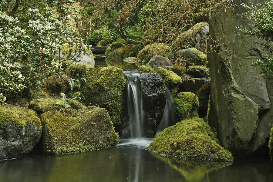 Quiet Garden by Melodie Madsen - Landscapes Waterscapes