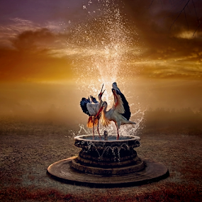Mandi Air by Juprinaldi Photoart  - Digital Art Things ( cranes                                  garden                                      fountain                        watersplash                   sky                         sunset )