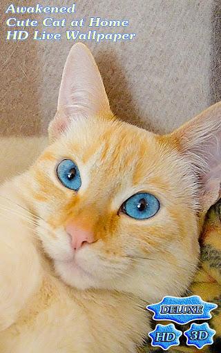 Awakened Cute Cat at Home