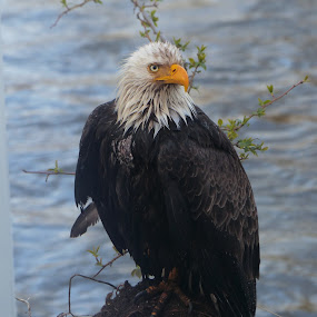 After the swim by Charlene Cadman - Animals Birds