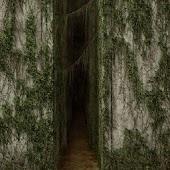Marsh Maze
