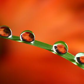 Quartet by Dhimas Prastowo - Nature Up Close Water (  )
